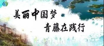 美丽中国梦,青藤在践行